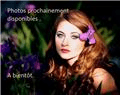 Pavot des Jardins - Buzzy Poppy Flowers