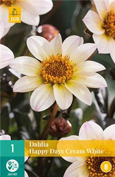 Dahlia Happy Days Cream White* 1 Pc