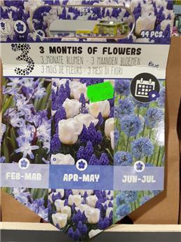 Bulbes mix 3 mois floraison Bleu  (VT) ** A planter en automne **