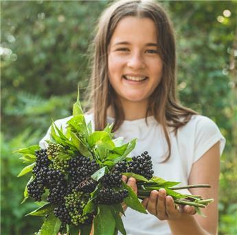 Sambucus nigra Haidegg Pot C5 ** Sureau à très forte production de fruits **