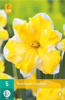 Narcisse Cassata * 5 pc cal.12/14