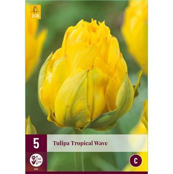 Tulipe Tropical Wave * 7 pc cal.11/12