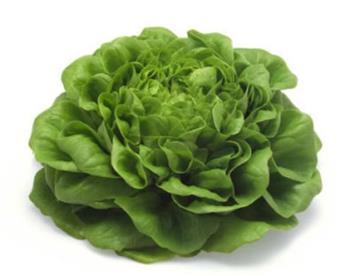 Salade salanova p9
