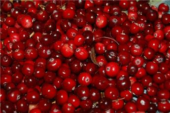 Canneberge cranberry c2