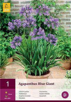 Agapanthus blue giant 1/2 x 1