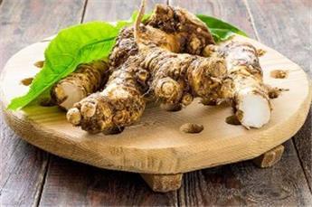 Armoracia rusticana Raifort Pot c1.5