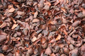 Ecorces de cacao 70l
