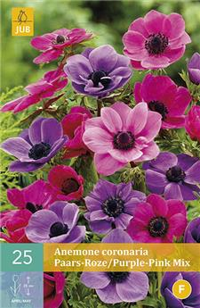 Anemone coronaria pourpre/rose mix 6/7 X 25 pc