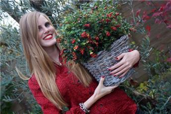 Vaccinium vitis idea Miss Cherry Pot C7.5