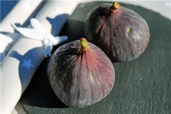 Ficus carica Rouge de Bordeaux 125 150 Pot C18 ** Unifère - Autofertile **