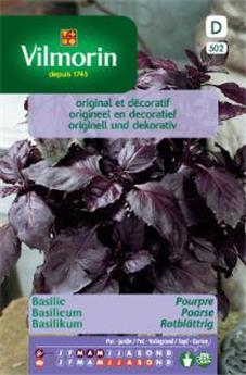 Basilic Pourpre - SD (Vilm)