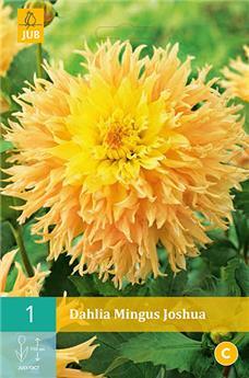 Dahlia Mingus Joshua * 1 Pc