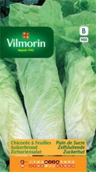Chicorée à feuilles Pain de Sucre - SB (Vilm)