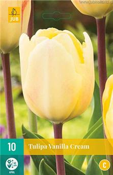 Tulipe vanilla cream * 10 pc cal.11/12