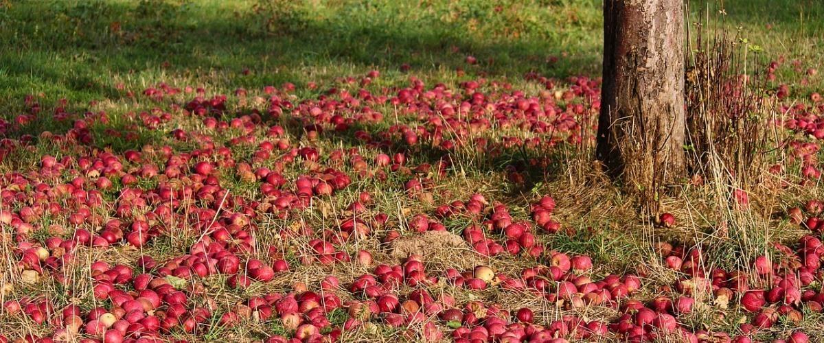 fruitiers automne